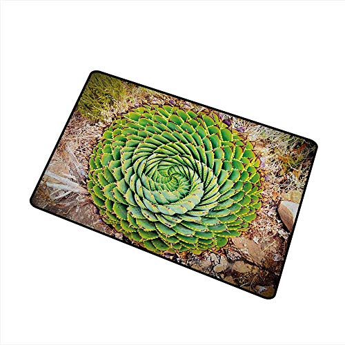Diycon Printed Door mat Plant National Flower of Lesotho South of Africa Aloe Polyphylla Spinning Spiral Aloe Vera W24 xL35 Easy to Clean