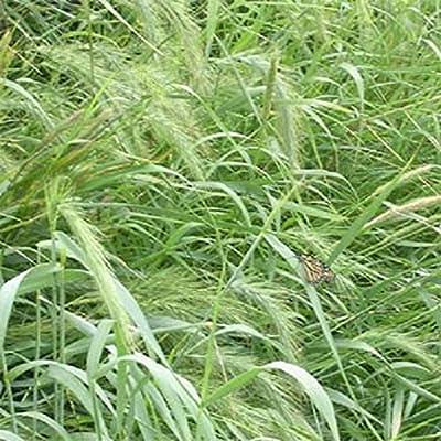 1 Oz Native Grass Seed Mix, Southeast, warm & cool-season grasses, 1/2 lbs/1, 000 sqft : Garden & Outdoor