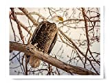 Bald Eagle - Wildlife Photograph Animal Picture Home Decor Wall Nature Print - Variety of Sizes Available
