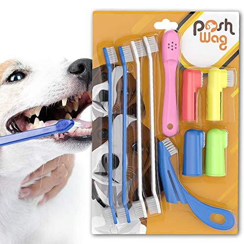 with Dental Care design