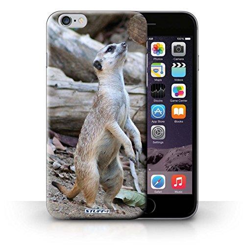 Kobalt® protector duro de nuevo caso / cubierta para el iPhone 6+/Plus 5.5 | Suricata Diseño | Animales de la fauna colección