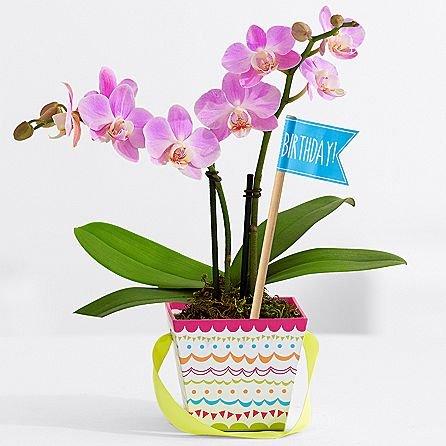 The Birthday Bunch - Same Day Birthday Flowers Delivery - Online Birthday Gifts - Birthday Present Ideas - Happy Birthday Flowers - Birthday Party Ideas (Birthday Delivery Gift Ideas)