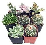 """Instant Cactus/Succulent Collection - 8 Plants 2"""" pots"""