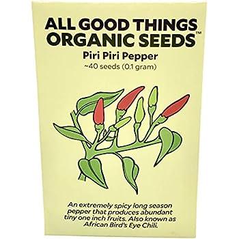 Amazon.com: 30 + cultivadas orgánicamente Piri Piri Chili ...