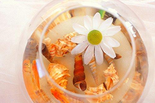 100PCS-Sea-Shells-Mixed-Ocean-Beach-Seashells-Natural-Colorful-Seashells-Starfish-Perfect-for-Vase-FillersWedding-Decor-Beach-Theme-Party-Home-DecorationsDIY-Crafts-Fish-TankCandle-Making