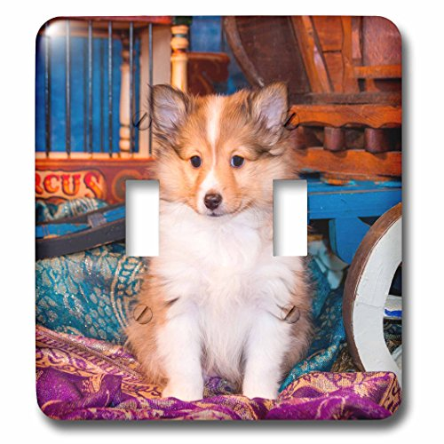 3dRose lsp_207150_2 Shetland Sheepdog Puppy Sitting by Small Wooden Wagon, Mr Double Toggle Switch Sitting Sheep