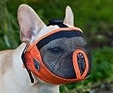 Canine Friendly Short Snout Dog