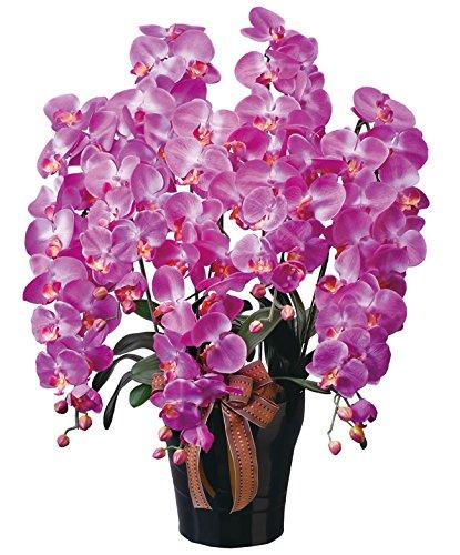 光触媒 光の楽園ロイヤル胡蝶蘭5本立L 玄関やリビングの華やかなアクセント B07BC8NGRW