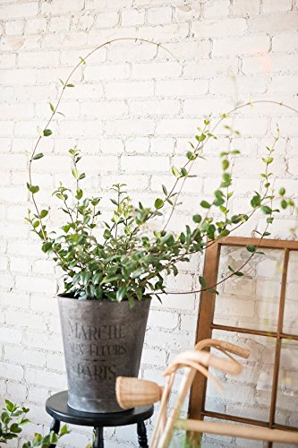 Confederate Jasmine, Trachelospermum Jasminoides (Excludes: AZ, CA), 3 Gallon by Root 98 Warehouse (Image #3)