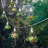 BrylaneHome Succulent String Lights (Multi,0)