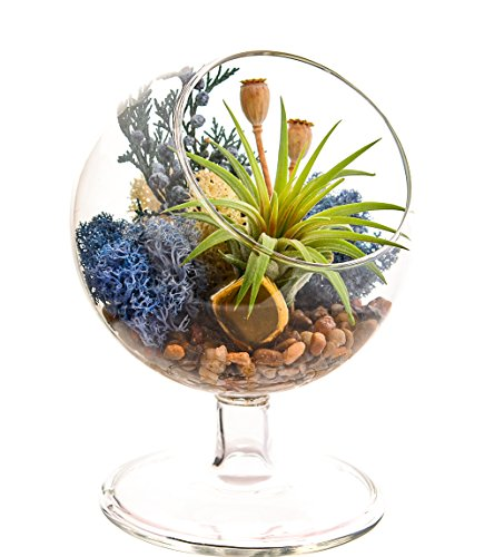 Bliss Gardens Air Plant Terrarium/4