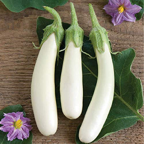 David's Garden Seeds Eggplant Gretel SL5278 (White) 25 Non-GMO, Hybrid Seeds