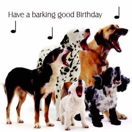Mixed Dogs Dog Song Have a Barking Good Birthday Birthday Card – Dog Birthday Card