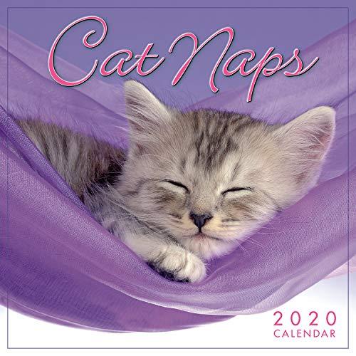 Cat Naps 2020 Calendar