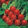 David's Garden Seeds Radish Early Scarlet Globe 8934 (Red) 200 Non-GMO, Heirloom Seeds