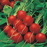 David's Garden Seeds Radish Early Scarlet Globe 8934 (Red) 200 Non-GMO, Heirloom Seeds