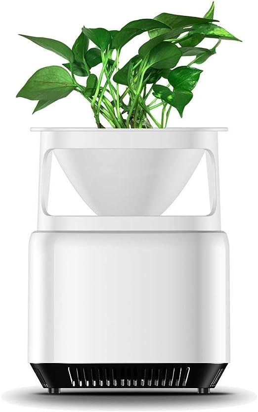 Weehey Micro purificador ecológico de Escritorio Purificador de ...