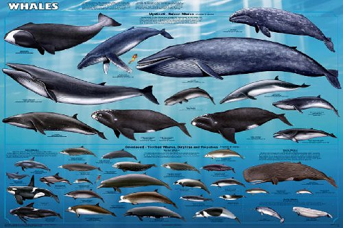 sea chart poster - 6