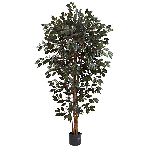 6' Ficus Tree - 6