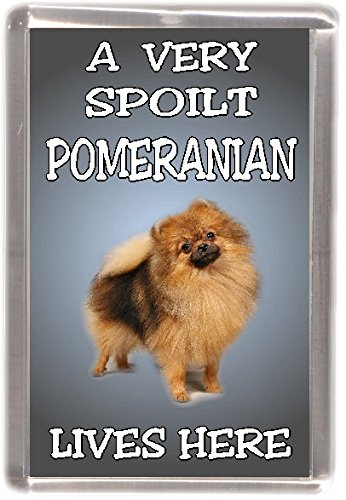 "Chow Chow Dog Fridge Magnet /""My Guardian Angel is a CHOW CHOW/"" by Starprint"