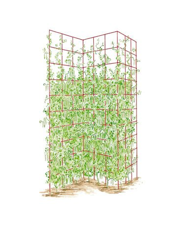 Gardeners Supply Company Three Trellis