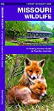 Missouri Wildlife: A Folding Pocket Guide to Familiar Animals (Wildlife and Nature Identification)