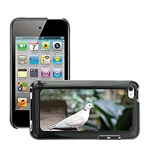 Etui Housse Coque de Protection Cover Rigide pour // M00112808 White Pigeon Paloma Pájaro Naturaleza // Apple ipod Touch 4 4G 4th