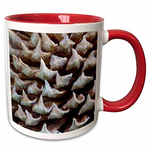 3dRose Danita Delimont - Flora - Sago palm flora, Savannah, Georgia, USA - US11 JWL0575 - Joanne Wells - 15oz Two-Tone Red Mug (mug_143780_10)