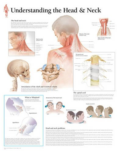 head and neck chart - 8