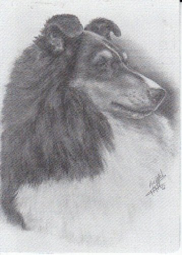 A Single Swap Playing Card Collie Dog or Sheltie Dog Head