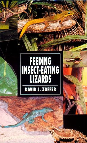 Feeding Insect Eating Lizards