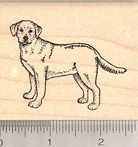 Labrador Retriever Dog Rubber Stamp, Yellow Lab