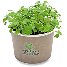Arugula Rucola Microgreens Grow Kit. Approximately 2000 seeds. Organic Seeds Sprouting Growing Set. Grow Your Own Fresh Herbs On Windowsill. 100% Bio Ecological Product. Seeds, Compost and Pot included. Simple way to have a home planter. Vegetables Culture Seasoning Diet Heirloom Vitamin Edible Recipe Healthy Supergreen Micro Crop Green Superfood Raw Food Non GMO DIY Indoor Kitchen Peppery Spice Rocket roquette