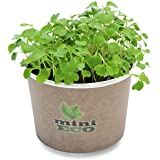 Organic Rocket Arugula Rucola Microgreens Grow Kit. Approximately 2000 seeds. Seeds Sprouting Growing Set Best Plant Herbs Vegetables