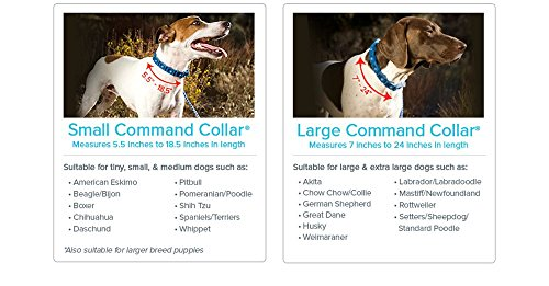 Don-Sullivans-Secrets-to-Training-the-Perfect-Dog-LARGE-DOG