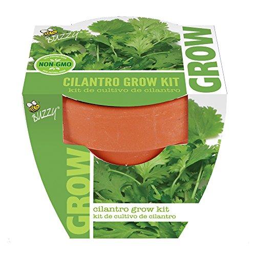 Buzzy 95722 Cilantro Mini Grow Pot