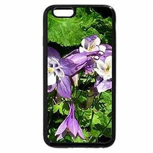 iPhone 6S / iPhone 6 Case (Black) Lavender Columbine Flowers