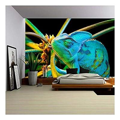 Fascinating Design, Yemen Chameleon Isolated on Black Background, Original Creation