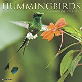 Hummingbirds 2020 Calendar