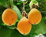 Sweet Granadilla Passiflora ligularis grenadilla passionfruit Flowering 10 Seeds