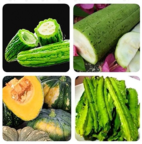 Ampalaya, Kalabasa, Sigarilyas at Patola Philippine Agriculture Vegetable Seeds (Bureau Of Plant Industry Seeds For Sale)