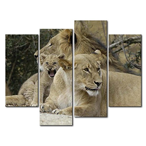 So Crazy Art 4 Panel Wall Art Painting Lion Family Rest Around