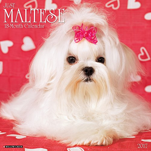 Just Maltese 2017 Wall Calendar (Dog Breed Calendars)