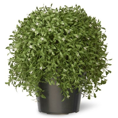 National Tree 18 Inch Argentia Plant in Green Pot (LAR4-700-18)