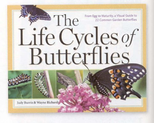The Life Cycles of Butterflies: From Egg to Maturity, a Visual Guide to 22 Common Garden Butterflies by Judy Burris (2006-03-30)