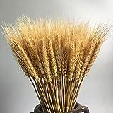 pictures of flower arrangements MLSG Dried Barley Golden Wheat Dry Flower Party Home Photos Décoration Wedding Floral Arrangements -100pcs Primary Color (Primary Color)