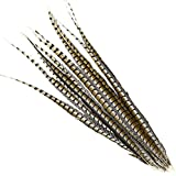 "1 Piece Lady Amherst CENTER Pheasant Feathers 30-40/"" Zebra-Look; Halloween//Craft"