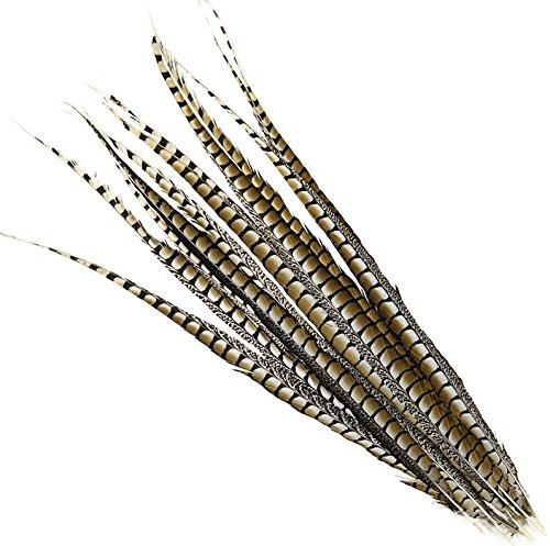 5 Pcs Lady Amherst Pheasant Tails 20