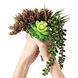 Artificial Succulent Plants Unpotted Realistic Look 3 Pack (Thriller Filler & Spiller Fake Succulents)
