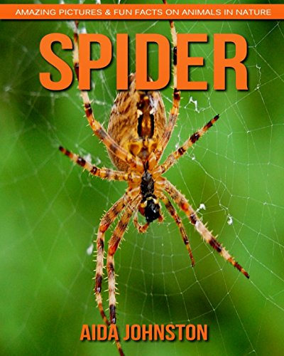 Read Online Spider: Amazing Pictures & Fun Facts on Animals in Nature PDF